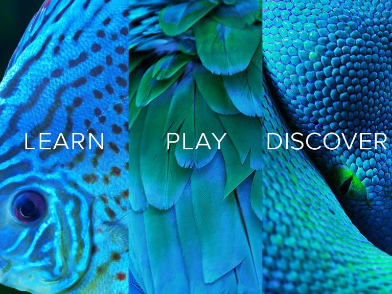 Learn, Play, Discover