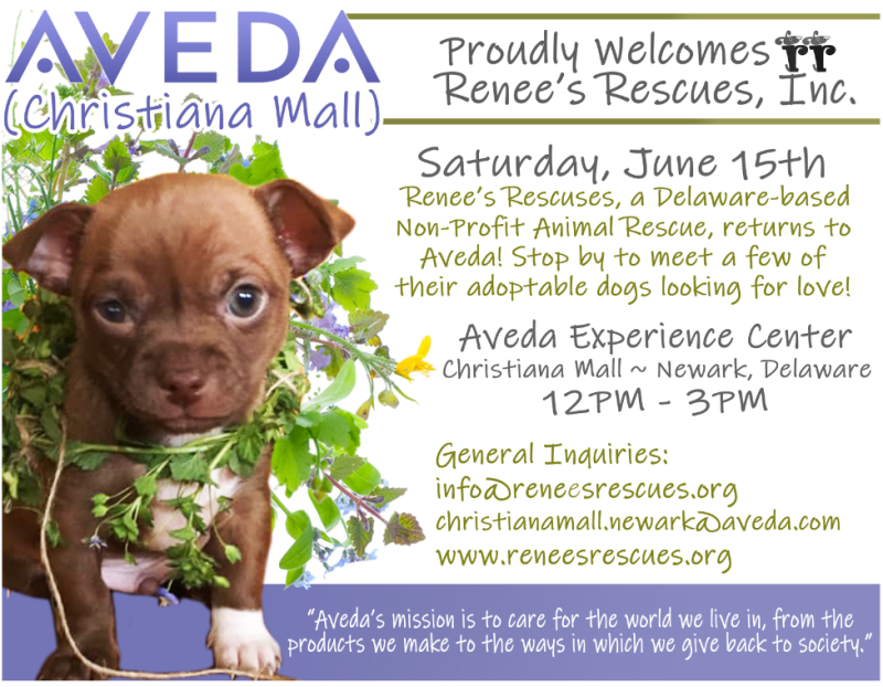Aveda Proudly Welcome's Renee's Rescues from Aveda
